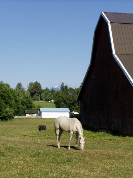 As a fellow horse owner I can assist you in locating or selling a horse property that will meet your needs.