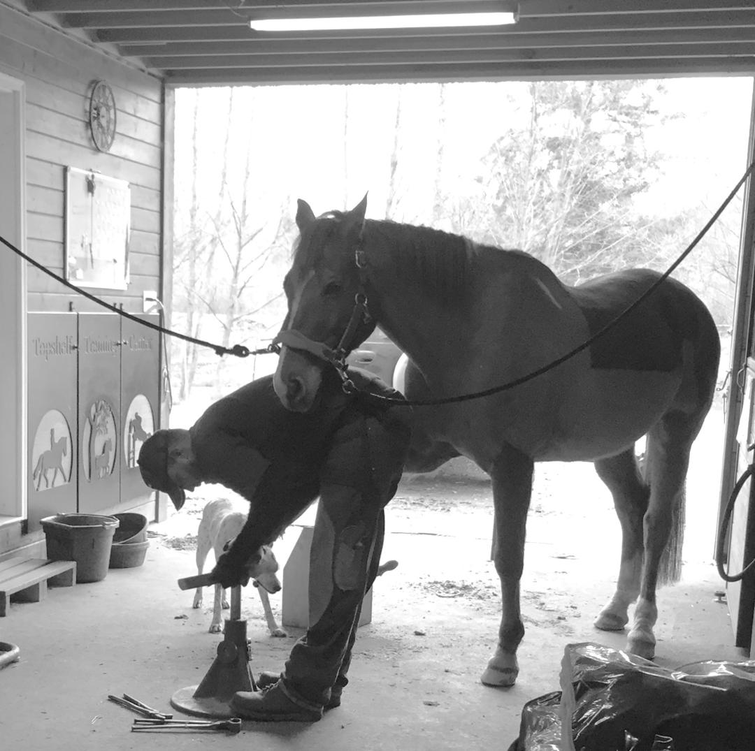 What an amazing profession I have. My journey to becoming a farrier has combined my passion for animals, ability to provide for my family, and interaction with the local equine community whom have been so good to me.  I wake up every day excited to the new challenges and new horses I get to meet!
