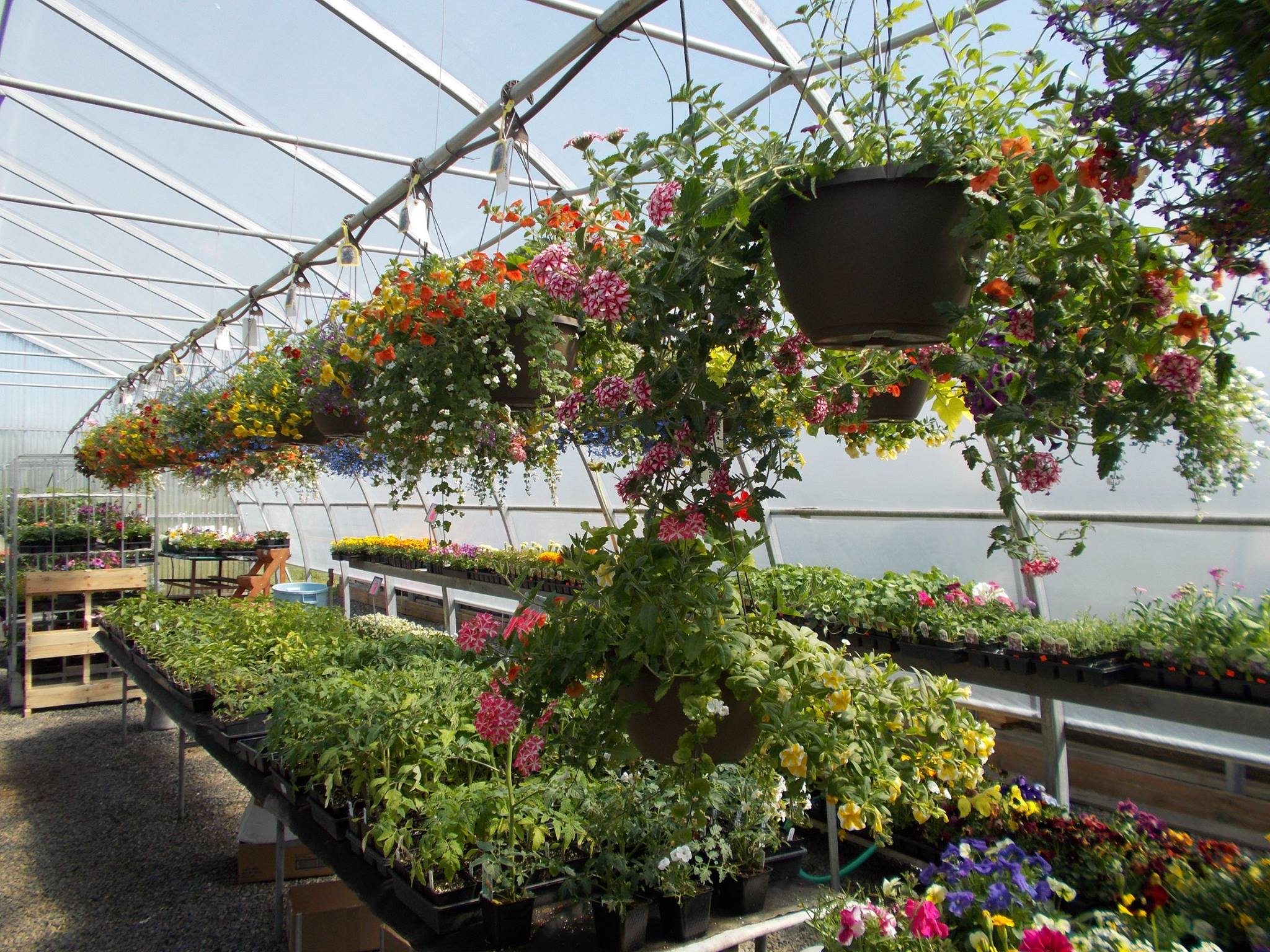 We offer a wide variety of products to help you with all your gardening needs! Whether it be vegetable seeds, potting soils, fertilizers, fungicides, or insecticides, we carry everything you need for a healthy, prosperous garden!