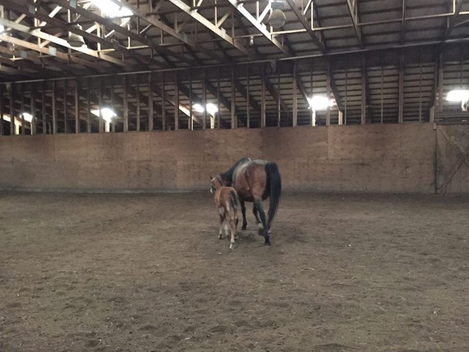Depending on the weather the indoor arena serves dual propose as a paddock.