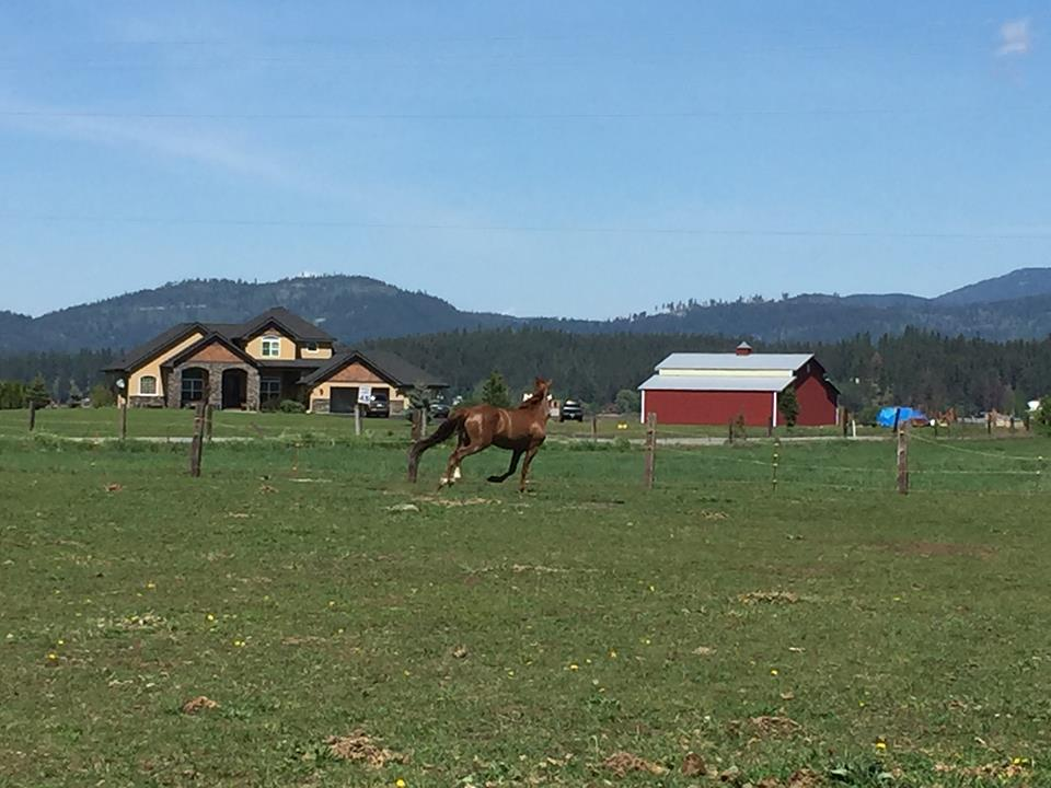 With 70 acres there are several pasture turnout options.