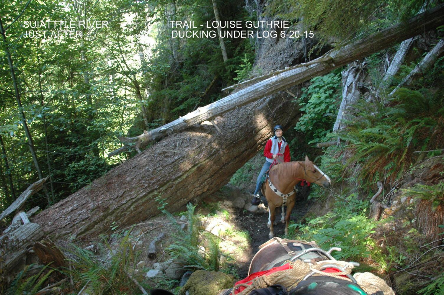 Suiattle R. Trail