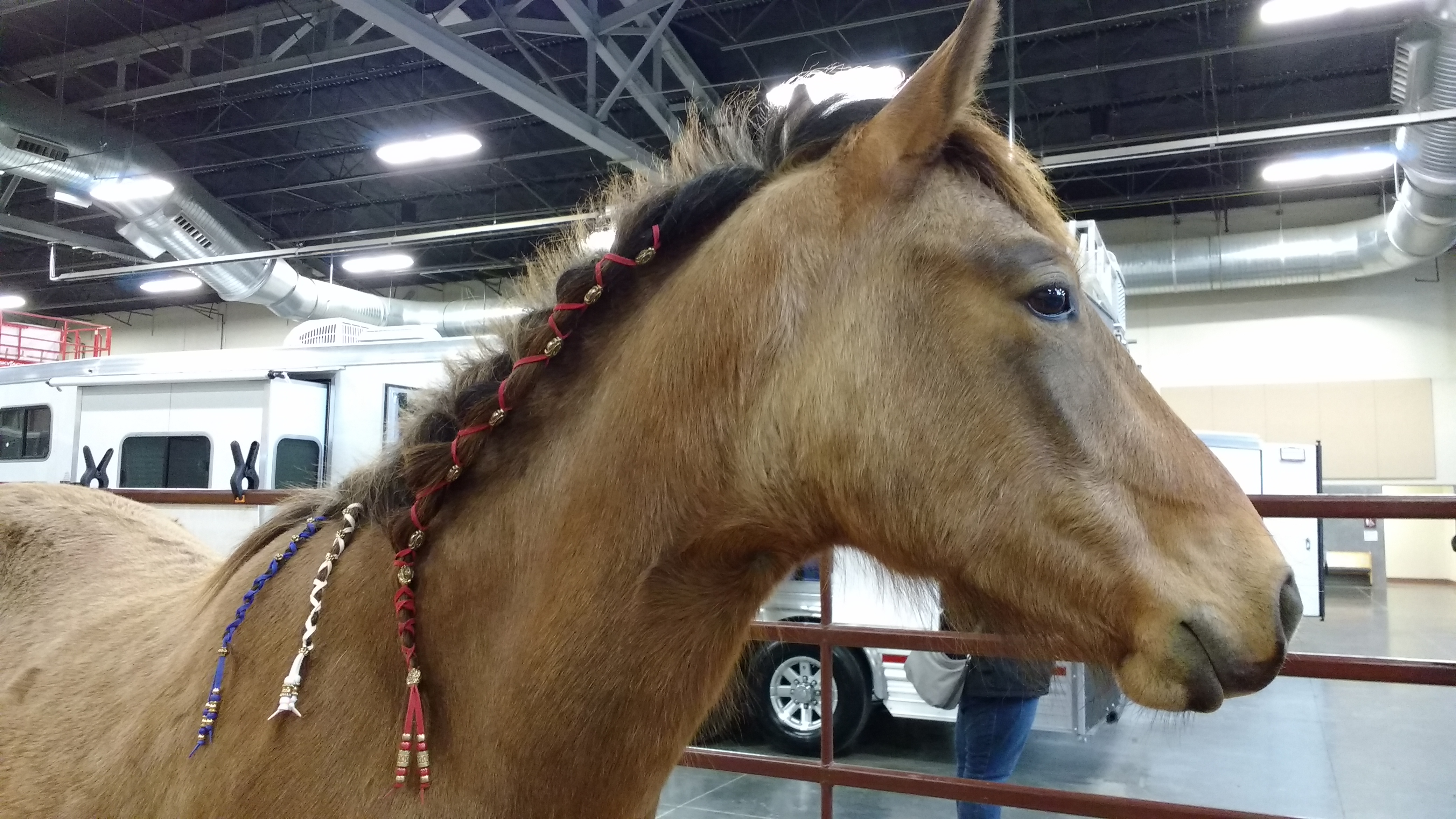 Dillon, a two year old Mustang, wearing our wraps.