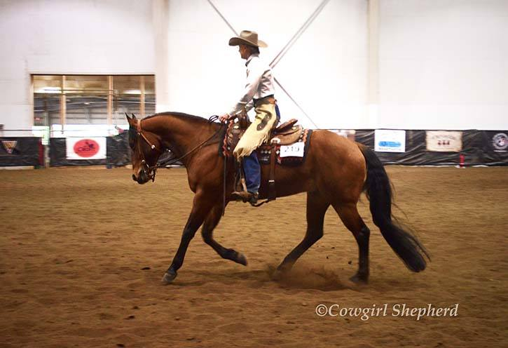 Whether you're wanting to qualify for a world show event, or simply improve your horsemanship skills and partnership with your horse, see what Sue can do for you.