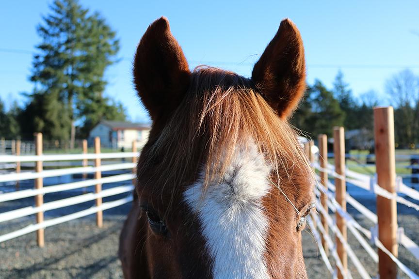 Horse in a HUA