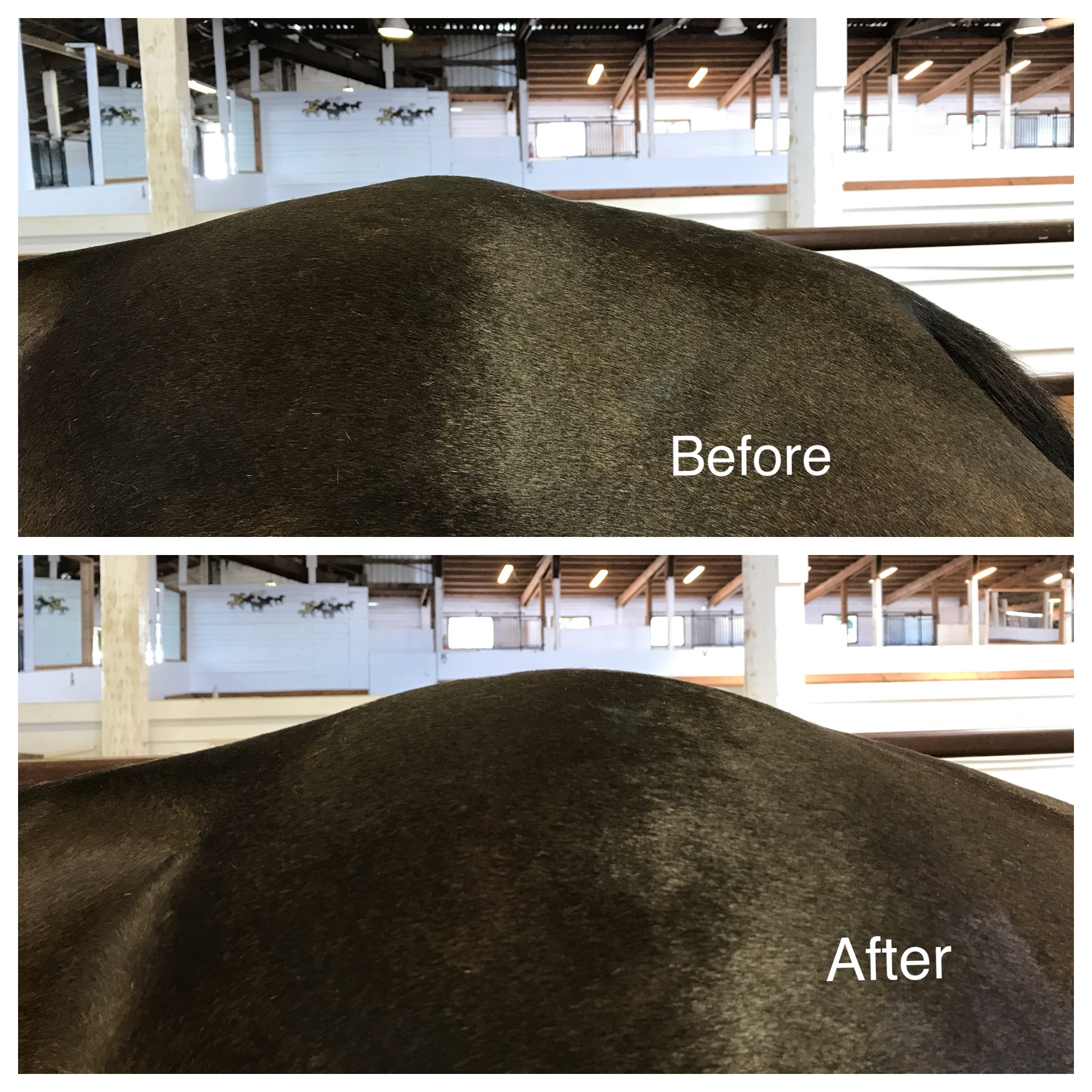 This is the croup/sacrum of an older thuroughbred mare.  Her body was able to release patterns of tension that were holding her hind end in a way that can impact movement and performace.  The change in the after picture was at the end of one session.