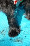 Busters dirty feet.jpg.png
