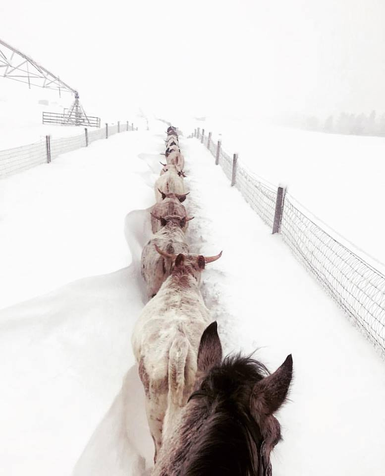 Natasha Mikita @nmikita at Paws Up Ranch in Montana for this share in their recent blizzard.  Follow Life Between The Ears from your favorite social media website and travel the world!