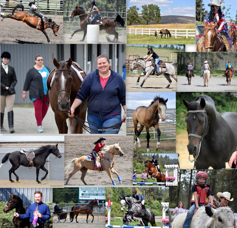 18-Spring-Trials-unfinished-Sport-Horse-Farm